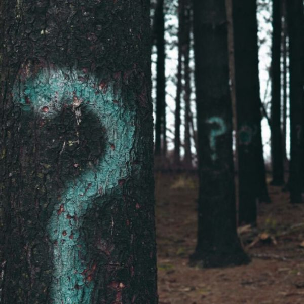 Buying roofing supplies image shows trees with teal colored question marks on them.